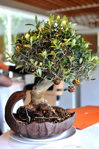 Caramelized Olives