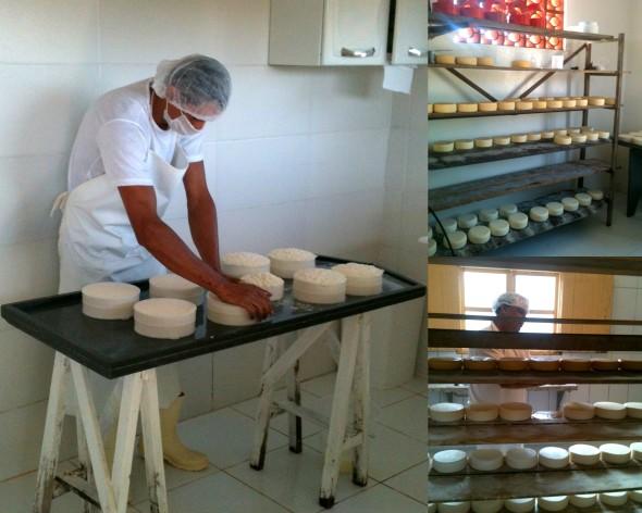 Allan da Família Queijo Dinho literalmente com a mão na massa; queijaria da Fazenda Boa Vista e abaixo o produtor Reinaldo da Fazenda Capivara mostrando suas crias